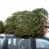 Responsible Parent AAA Reminds You How to Safely Bring Home Your Christmas Tree