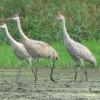 GM's Wildlife Habitats Continue to Thrive