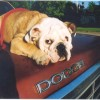 How to Pet-Proof Your Car And Keep It Clean