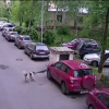 [VIDEO] Russian Dogs Eat Toyota RAV4