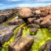 Genetic Engineering May Make Algae a Real Biofuel Contender for the Future