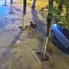 Why on Earth Would You Steal Pavement?