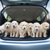 Opel: Here Are Some Good Dogs, and Also Cars