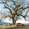 Subaru Renews Partnership with National Wildlife Federation