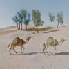 Photographer Travels the World via Google Street View