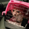 How to Safely Transport Your Cat in the Car
