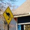 Kangaroo Crossing Sign Drama Unites Neighborhood in a Land That's Not Down Under