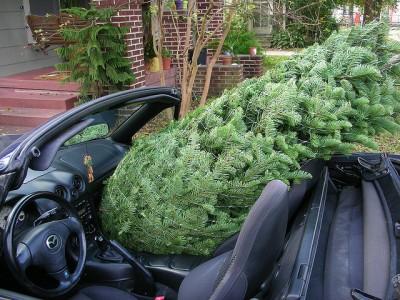Christmas Tree Convertible