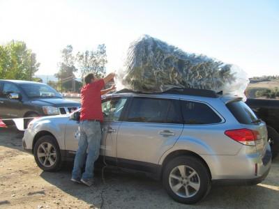 how to haul christmas tree