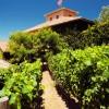 Best Road Trip Destinations: Napa Valley