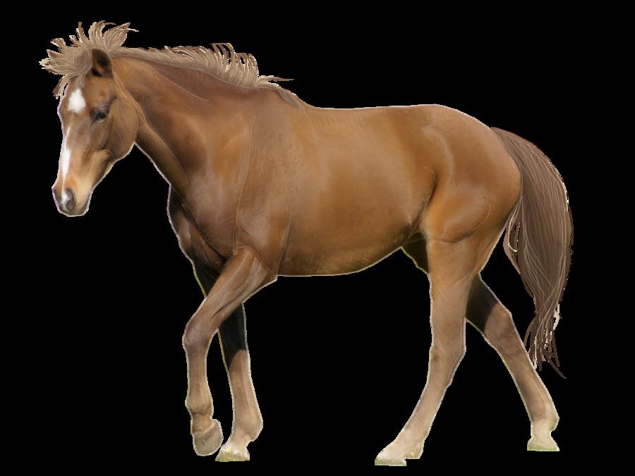 Horse Gallery | The News Wheel