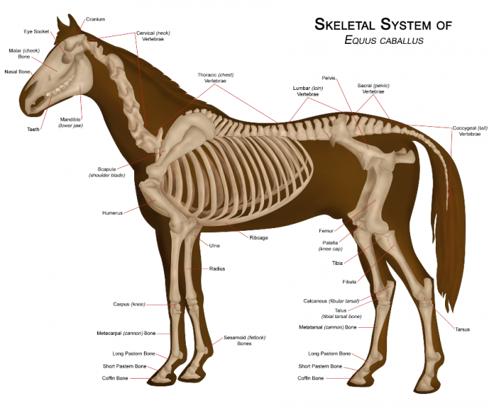 2014 Horse Overview