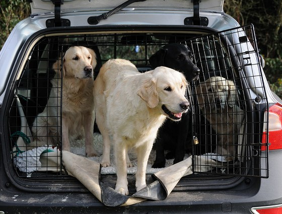 Tips For Road Trips With Your Pets The News Wheel