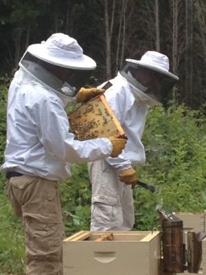Toyota helps honeybees