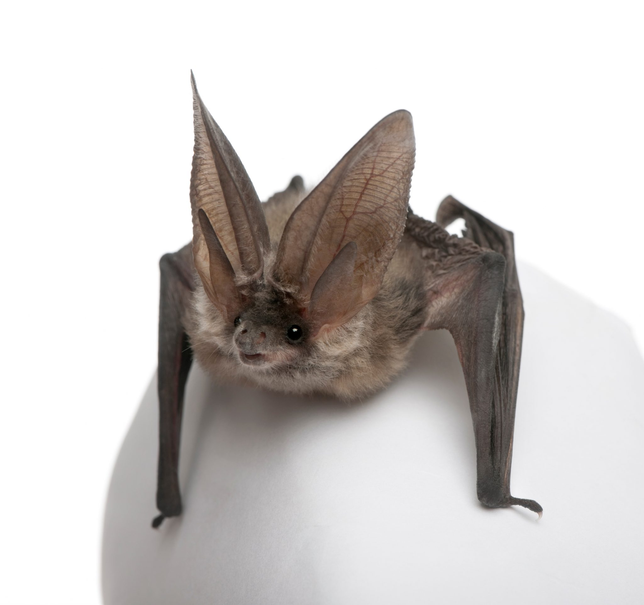 Homes for Bats with Chevy Volt Battery Covers