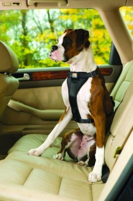 Should My Dog Wear A Seat Harness?