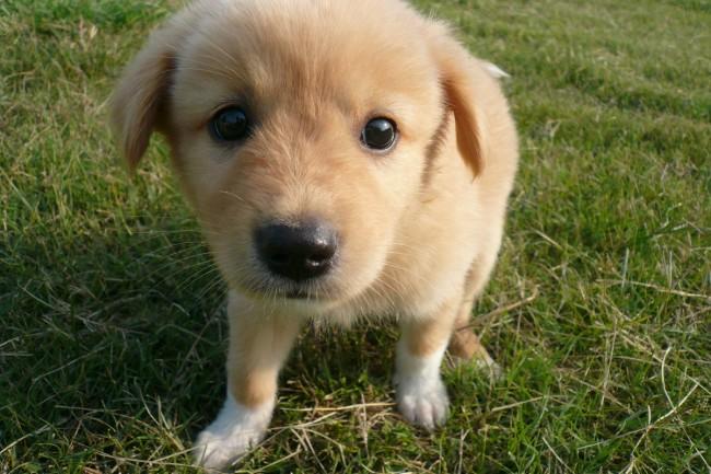 Mazda Foundation Donates to SPCA shelter with puppy - Jimmy Hsu
