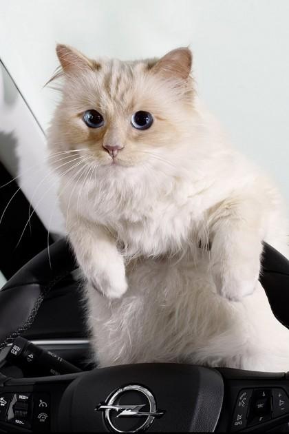 Karl Lagerfeld Opel's 2015 Calendar Opel Cats in Cars 1(2)