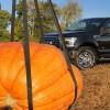 f150-pumpkin04