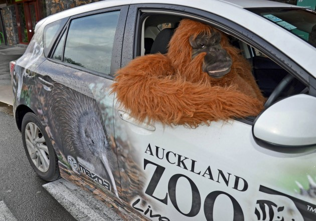 Zoo's Conservation Efforts Auckland Mazda Ape Car