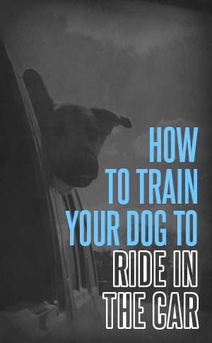 how to train your dog to ride in the car