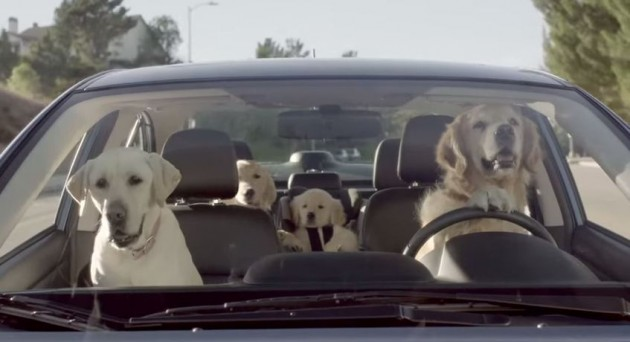 New Car Seat Dog Video