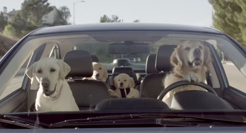 [WATCH] The Subaru Dog Commercials Are Too Cute for Words ...