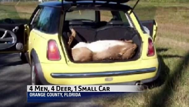 dead deer MINI Cooper