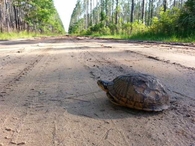 How to Help a Turtle Cross the Road