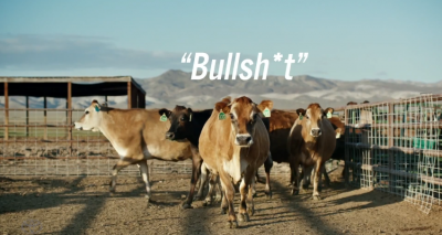 Toyota Cows