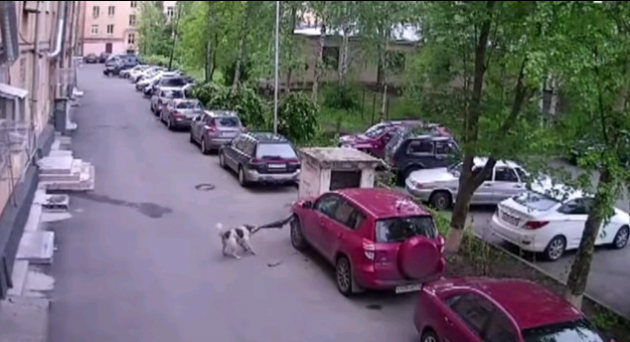 Russian dogs eat Toyota RAV4