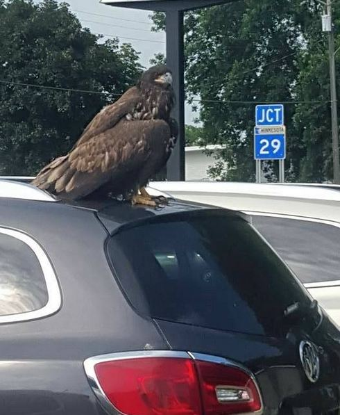 Eagle on Buick