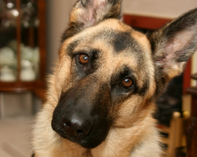 Jennifer Beal Defends Decision To Leave German Shepherd Inside Hot Vehicle