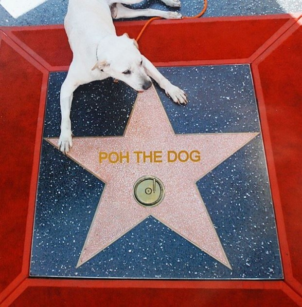 Poh the dog road trips across America