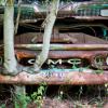 Old Car City Tree Through Bumper