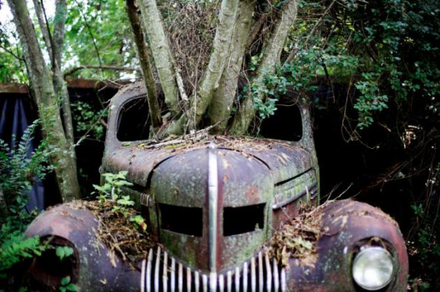Old Car City Tree Through Hood