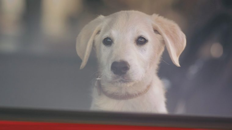 Dog from Opel OnStar commercial