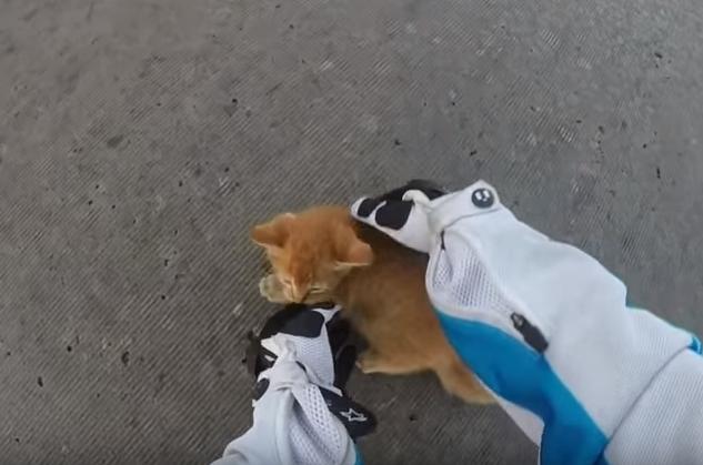 motorcyclist rescues kitten