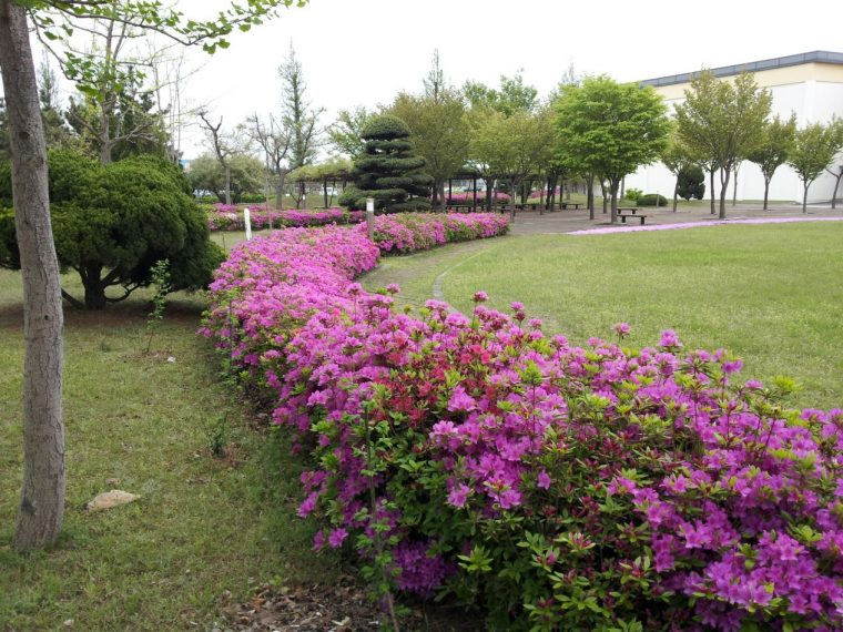 Royal azaleas bloom at the two-acre wildlife habitat at GM's Gunsan Complex in South Korea
