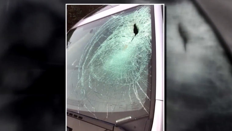 Honda Civic windshield hit by seagull