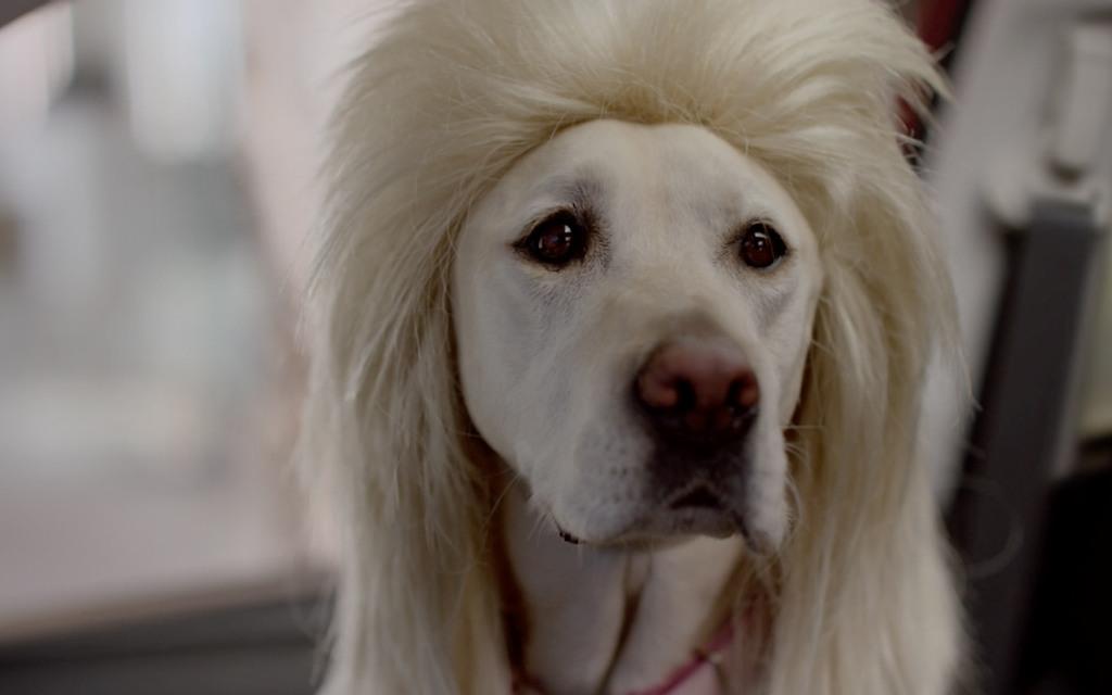 Celebrity dog pedigree game
