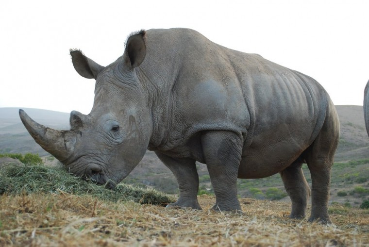 rhino vs toyota suv