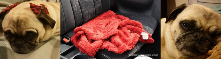 Febreze In-Wash Odor Eliminator Laundry Additive pug dog blankets