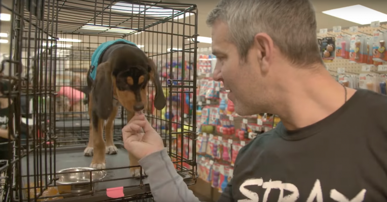 Watch What Happens: Live host Andy Cohen feeds a dog at Social Tees Animal Rescue shelter as part of Chevrolet's #DayItForward campaign