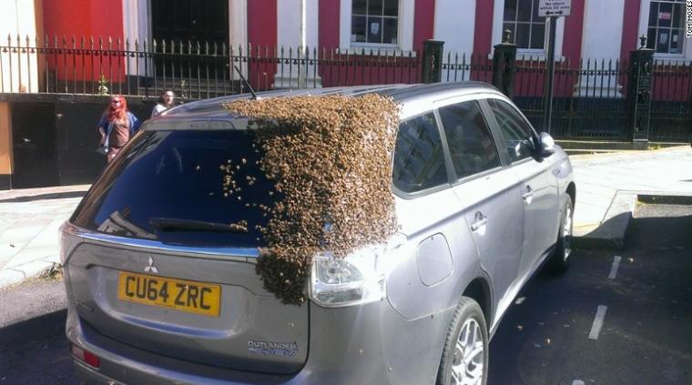 Bees Swarm Mitsubishi Outlander PHEV