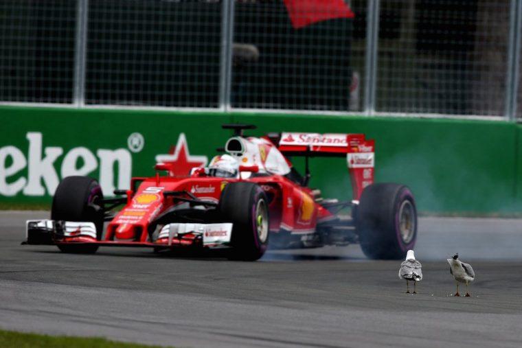 Vettel Avoids Seagulls