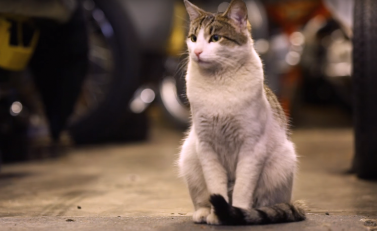 Cat from Honda Serial One video