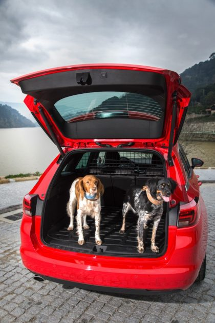two dogs, one Opel Astra Sports Tourer