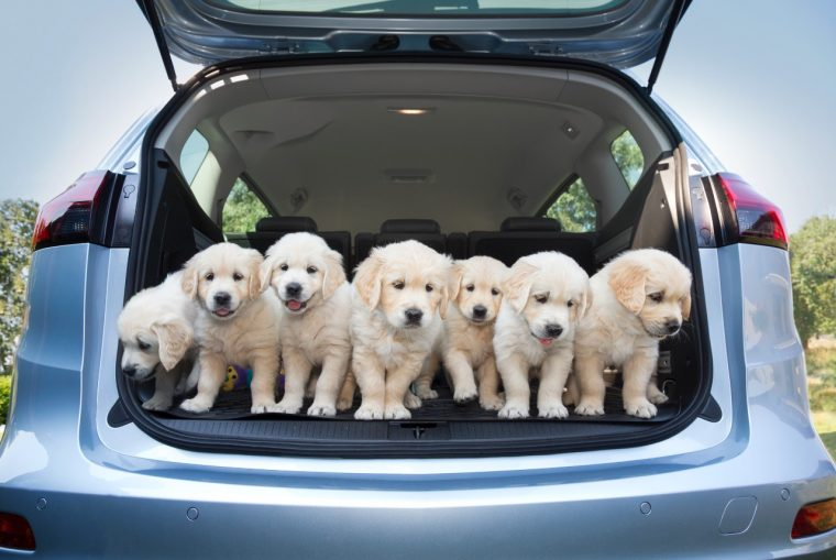 Opel Zafira and puppies