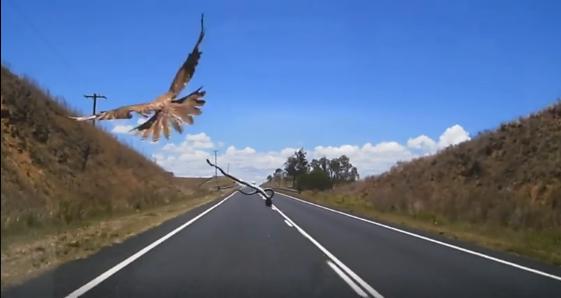 hawk-throwing-snake